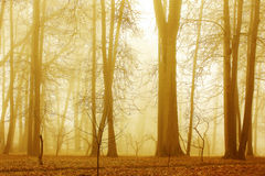 清早雾的森林 库存图片