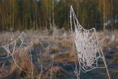 清早雾,在领域的霜,在绿色植物,春天背景和,在的蜘蛛网 图库摄影