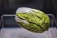 清朝利用仿生学的瓷圆白菜装饰在博物馆 免版税库存照片