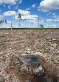 清楚森林在瑞典 免版税库存图片