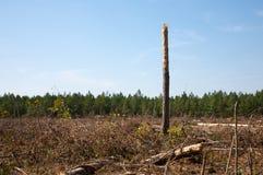 清楚森林断枝结构树 库存图片