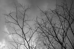 清楚的天空有白色云彩视图通过干树 免版税库存照片
