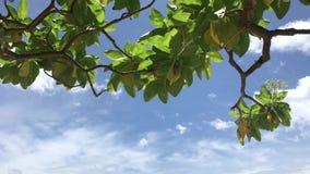清楚的天空蔚蓝和热带植物 努沙Dua海滩,巴厘岛,印度尼西亚 股票录像