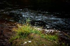 清楚的小河流动的水 免版税图库摄影