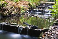 清楚的流动的小河 免版税库存图片