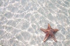 清楚的海星水 免版税库存图片