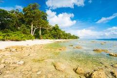 低潮晃动原始未触动过的海滩森林 库存图片