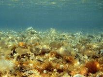 清楚的海洋 免版税库存照片