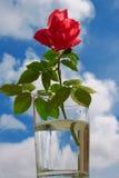 清楚的玻璃玫瑰 库存照片