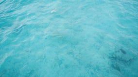 清楚的水色海洋在马尔代夫 库存照片