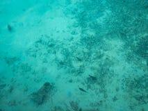 清楚的水色海洋在马尔代夫 库存图片