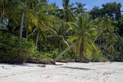 清楚绿松石热带玻利尼西亚天堂海滩海洋海水晶的水 免版税库存照片