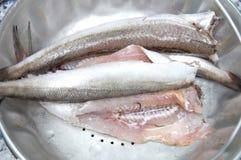 清洗原始的鱼 库存图片