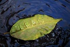 清洗叶子 库存图片