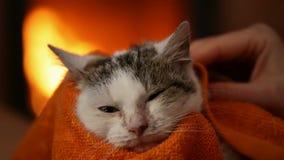 清洗抢救小猫的妇女手在壁炉 股票录像