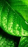 清洗新鲜的绿色叶子 免版税库存照片