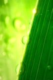 清洗新鲜的绿色叶子 库存照片