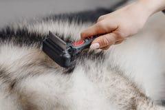 清洗的动物的特别刷子在框架的中心,梳狗的后面特写镜头 免版税库存照片