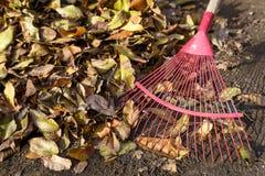 清洗的落叶在庭院里在秋天使用犁耙 特写镜头 图库摄影