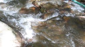清洗forestSmall山河的淡水 在山的水 河在森林里在冬天 国家公园 青少年的Tok皇家Proje 股票录像