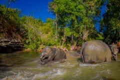 清莱,泰国- 2018年2月01日:一个小组游人是愉快在大象密林沐浴大象 免版税库存图片