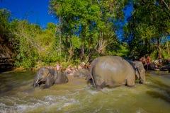 清莱,泰国- 2018年2月01日:一个小组游人是愉快在大象密林沐浴大象 库存图片