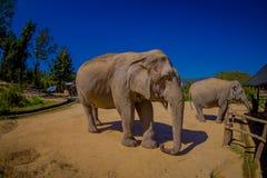 清莱,泰国- 2018年2月01日:两头美丽的巨大的大象正面图在一个密林圣所的在清迈 库存图片