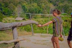清莱,泰国- 2018年2月01日:喂养一头巨大的厚皮类动物大象用一个小的香蕉的未认出的妇女和 免版税库存照片