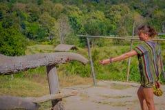 清莱,泰国- 2018年2月01日:喂养一头巨大的厚皮类动物大象用一个小的香蕉的未认出的妇女和 图库摄影
