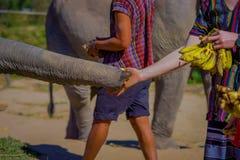 清莱,泰国- 2018年2月01日:喂养与一束小的香蕉一种巨大的厚皮类动物的未认出的人 库存照片