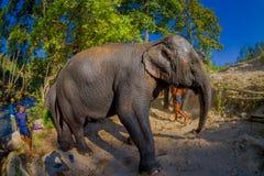 清莱,泰国- 2018年2月01日:在河岸附近的年轻大象步行在自然,在大象密林 图库摄影
