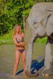 清莱,泰国- 2018年2月01日:室外观点的接近一头巨大的大象的未认出的妇女在密林 库存照片