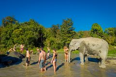 清莱,泰国- 2018年2月01日:室外观点的接近的未认出的人巨大的大象在密林 免版税库存照片
