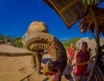 清莱,泰国- 2018年2月01日:惊人的观点的接近的未认出的人巨大的大象,有伟大 库存照片