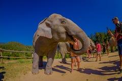 清莱,泰国- 2018年2月01日:拍接近一头巨大的厚皮类动物大象的未认出的人民照片,在期间 免版税库存图片