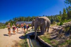 清莱,泰国- 2018年2月01日:拍接近一头巨大的大象的未认出的人民照片在密林 免版税库存照片