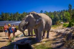 清莱,泰国- 2018年2月01日:拍接近一头巨大的大象的未认出的人民照片在密林 库存照片