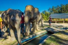清莱,泰国- 2018年2月01日:接近一头巨大的大象的未认出的人在密林圣所在清迈 库存照片