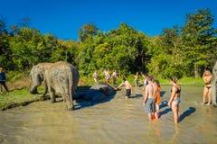 清莱,泰国- 2018年2月01日:接近一头巨大的大象的未认出的人在密林圣所,大象温泉 免版税库存图片