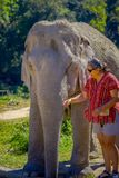 清莱,泰国- 2018年2月01日:未认出的妇女佩带的太阳镜和纵容一头巨大的厚皮类动物大象 免版税库存图片
