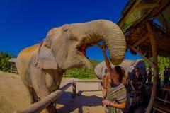 清莱,泰国- 2018年2月01日:的巨大的大象吃一束与他的开放树干的香蕉的惊人的观点 库存图片
