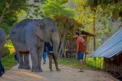 清莱,泰国- 2018年2月01日:的未认出的人进来接近一头年轻大象的惊人的室外观点 免版税图库摄影
