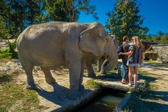 清莱,泰国- 2018年2月01日:看一头巨大的大象的室外观点的未认出的人民在密林 库存图片
