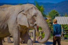 清莱,泰国- 2018年2月01日:穿蓝色T恤杉的未认出的人哺养与小的巴南巨大 库存照片