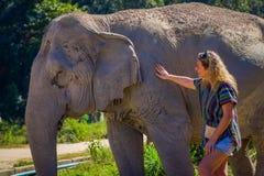 清莱,泰国- 2018年2月01日:纵容一头巨大的厚皮类动物大象的未认出的白肤金发的妇女在密林 免版税图库摄影