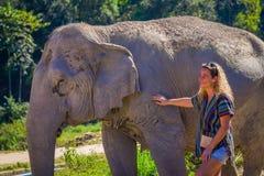 清莱,泰国- 2018年2月01日:纵容一头巨大的厚皮类动物大象的未认出的白肤金发的妇女在密林 库存照片