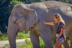 清莱,泰国- 2018年2月01日:纵容一头巨大的厚皮类动物大象的未认出的白肤金发的妇女在密林 免版税库存照片