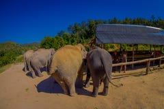 清莱,泰国- 2018年2月01日:美丽在观点的接近5巨大的厚皮类动物的未认出的人上 免版税图库摄影
