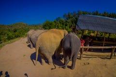 清莱,泰国- 2018年2月01日:美丽在观点的接近5巨大的厚皮类动物的未认出的人上 库存照片