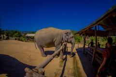 清莱,泰国- 2018年2月01日:美丽的巨大的大象正面图在一个密林圣所的在清迈,  库存图片